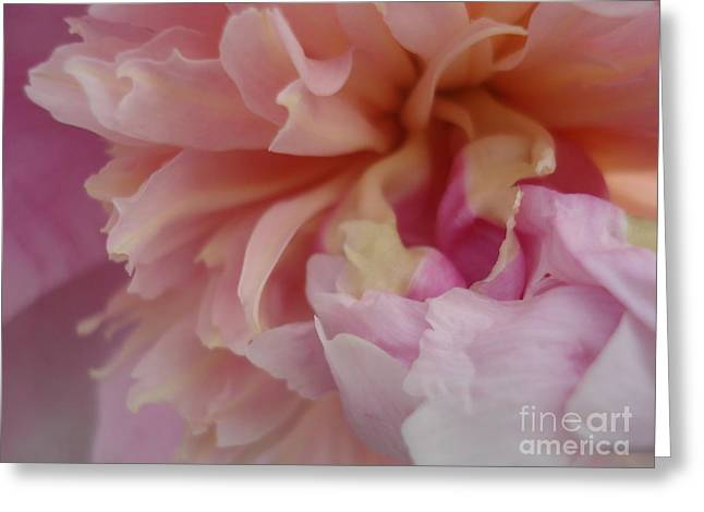 Peony Compassion Greeting Card by Kim Heil