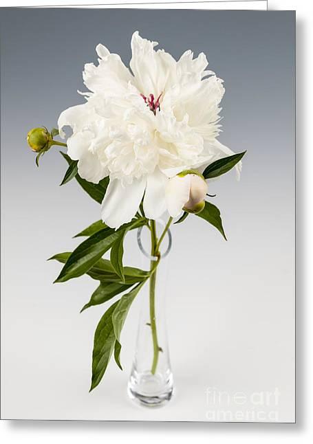 Peony Flower In Vase Greeting Card