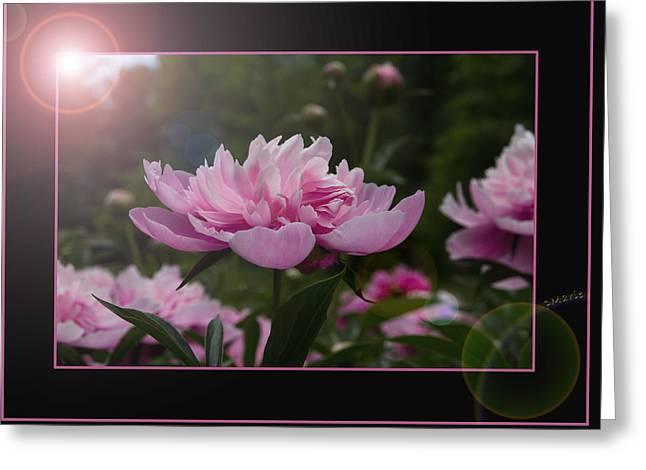 Greeting Card featuring the photograph Peony Garden Sun Flare by Patti Deters