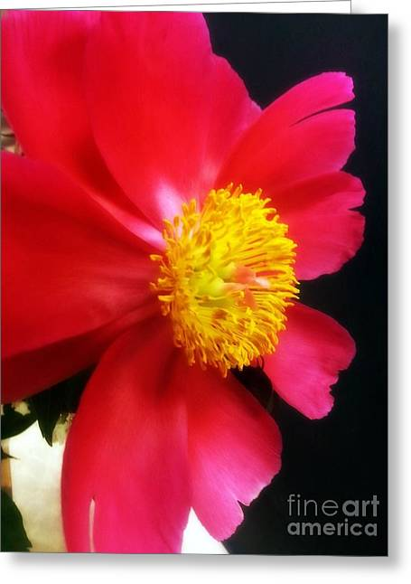 Peony Greeting Card by Heather L Wright