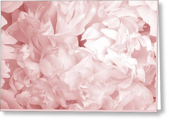Peony Pink Beauty Greeting Card