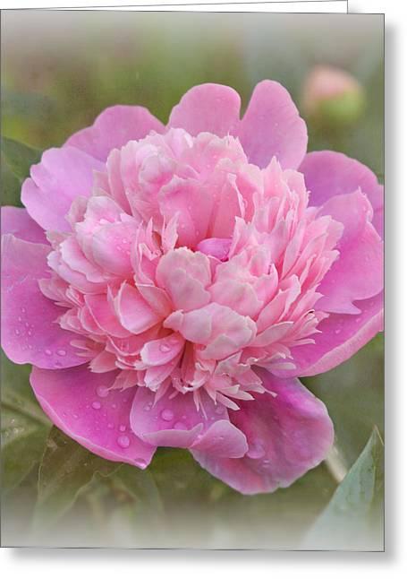 Peony - Pink Greeting Card by Sandy Keeton