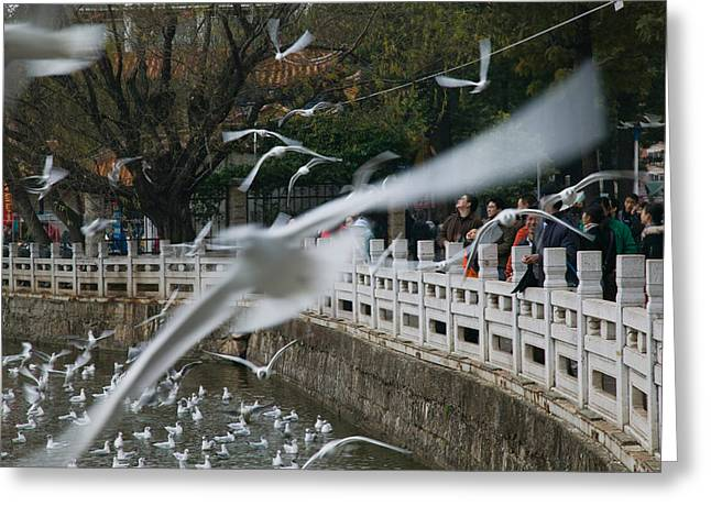 People Feeding The Gulls In A Park Greeting Card