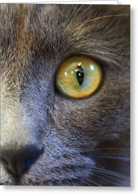 Pepper's Eye Greeting Card by Alicia Knust