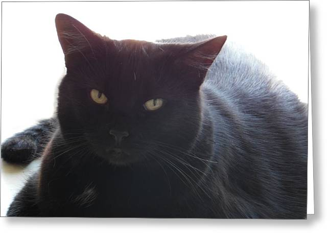 Pepsi The Lucky Black Cat Greeting Card