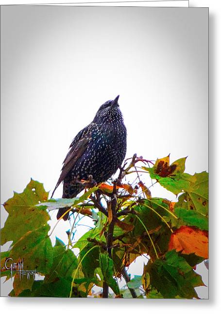 Perched Aloft Greeting Card