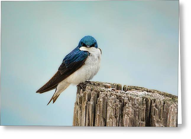 Perched And Waiting Greeting Card