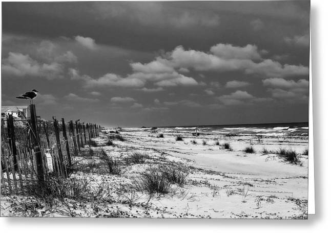 Perched At St. George Island Greeting Card by Toni Hopper
