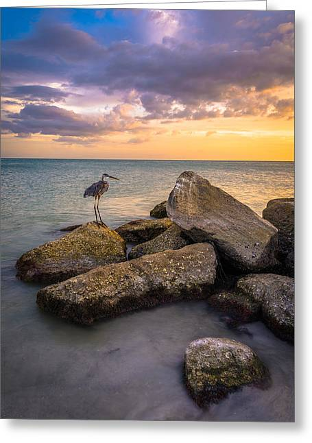 Perched Greeting Card by Clay Townsend