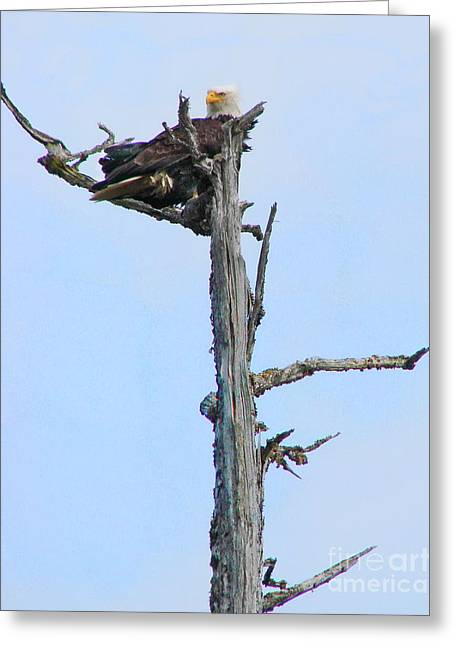 Perched Eagle Greeting Card