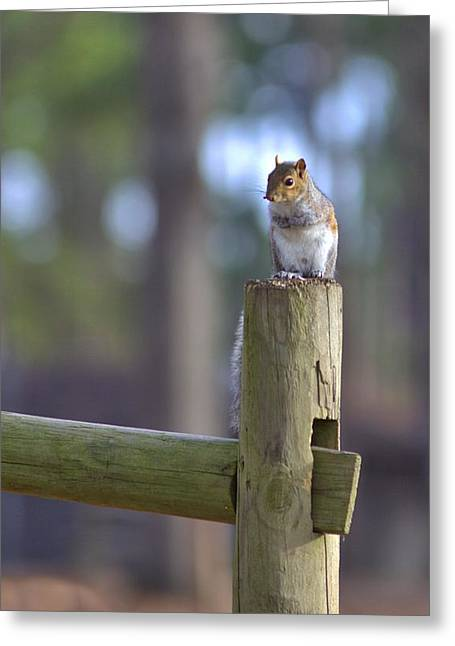 Perched Greeting Card by Gordon Elwell