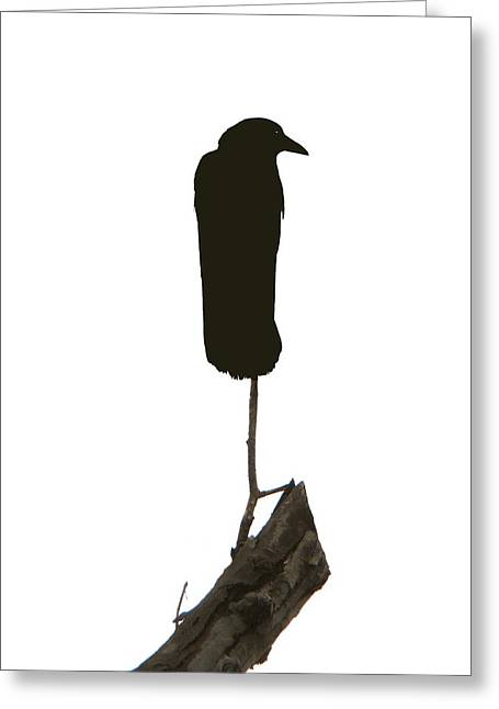 Perched Greeting Card by Gothicrow Images