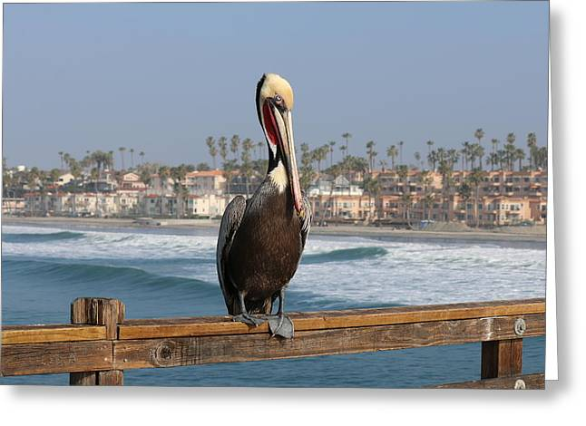 Perched On The Pier Greeting Card