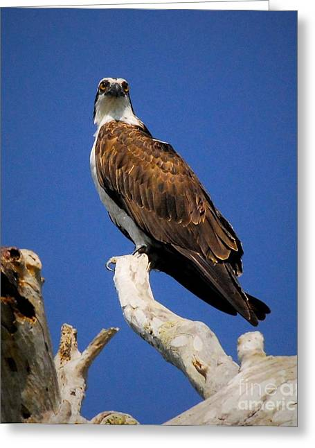 Perched Greeting Card