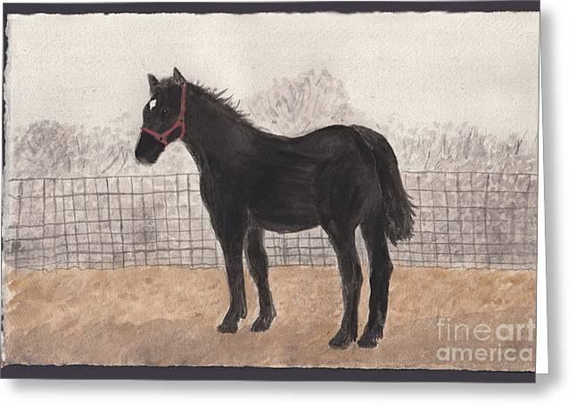 Percheron Colt In November Fog Greeting Card by Conni Schaftenaar
