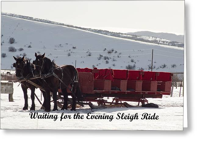 Greeting Card featuring the photograph Percheron Horse Team by Daniel Hebard