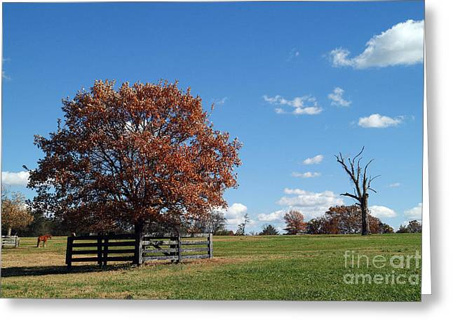 Percy Warner Park Greeting Card by Jeff Holbrook