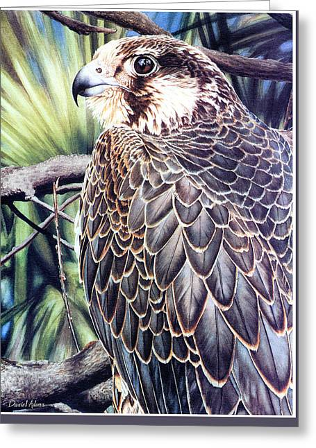 Da138 Peregrine Falcon By Daniel Adams Greeting Card