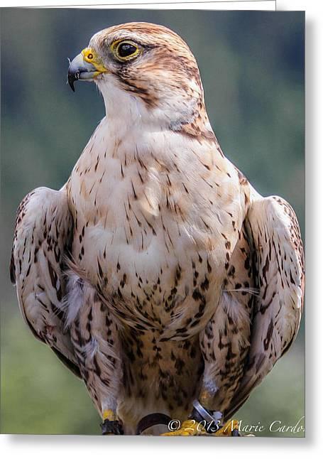 Peregrine Falcon Greeting Card by Marie  Cardona