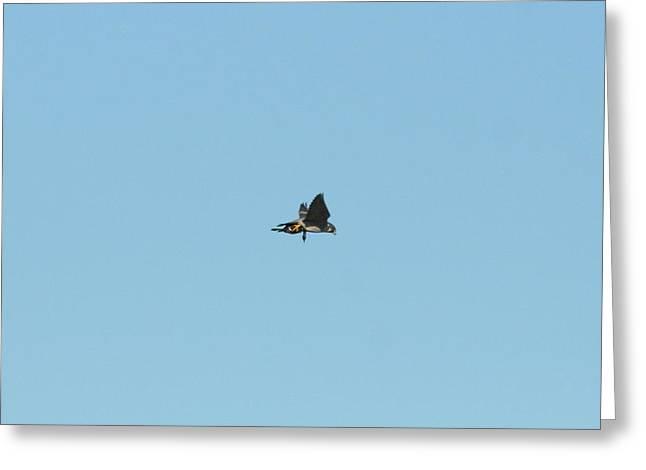 Peregrine Falcon With Prey Greeting Card by Teddy V