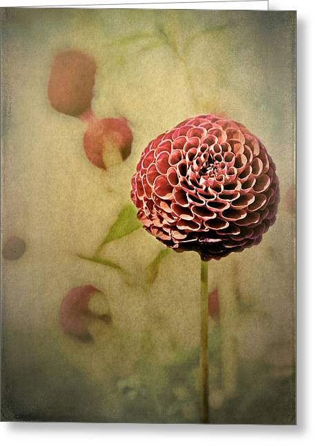 Perennial Gardens - Fall #01 Greeting Card by Loriental Photography