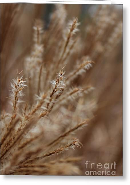 Perennial Grass Greeting Card by Arlene Carmel