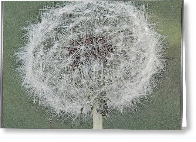 Perfect Dandelion Greeting Card