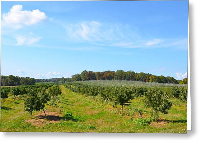 Perfect Fall Day On Alstede Farm Greeting Card