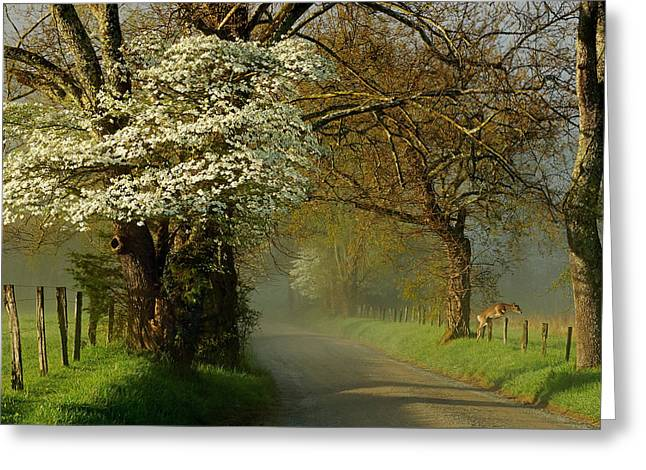 A Perfect Morning Greeting Card by Deb Campbell
