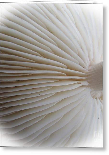 Perfect Round White Mushroom Greeting Card by Tina M Wenger