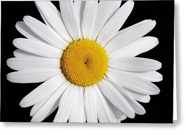 Perfectly Daisy Greeting Card