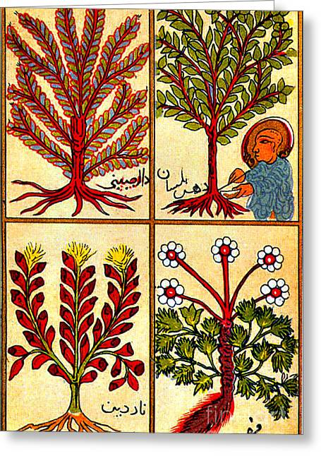 Perfumes Of The Hebrews, 12th Century Greeting Card