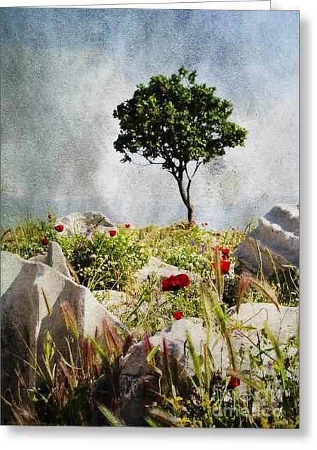 Pergamum's Tree Greeting Card