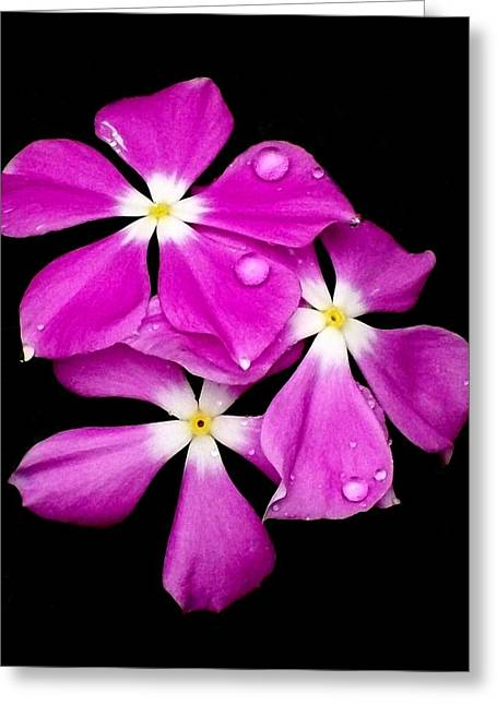 'periwinkle Flowers After Rainfall' Greeting Card