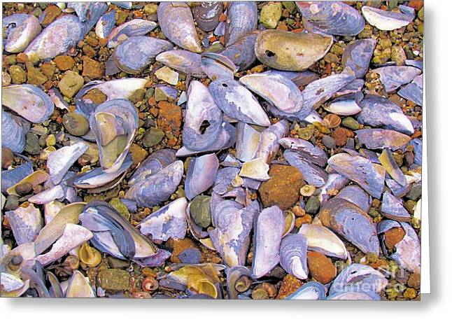 Periwinkles Muscles And Clams Greeting Card