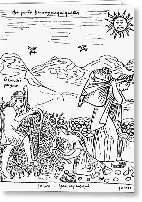 Peru Harvesting Potatoes Greeting Card by Granger
