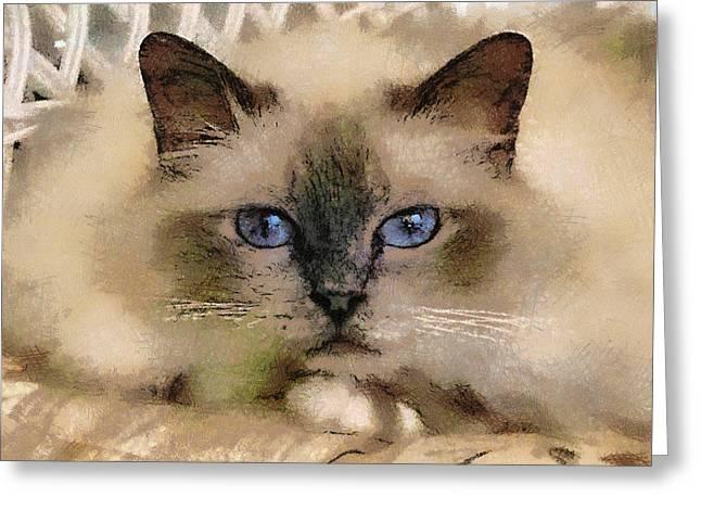 Pet Cat Greeting Card