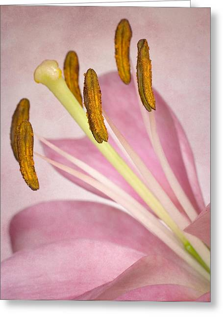 Petals And Company Greeting Card