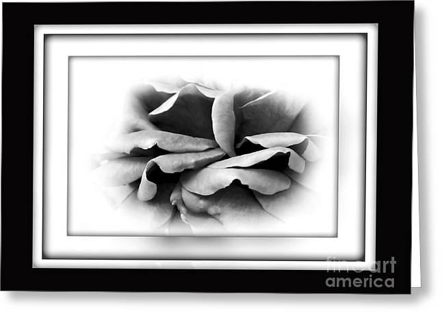 Petals And Shadows 2 Greeting Card