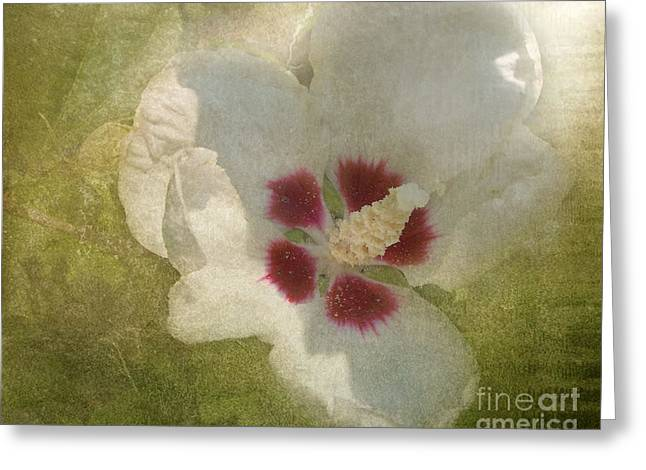 Petals In Shadows Greeting Card