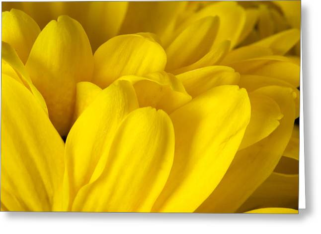Petals Of A Yellow Daisy Greeting Card by S Cass Alston