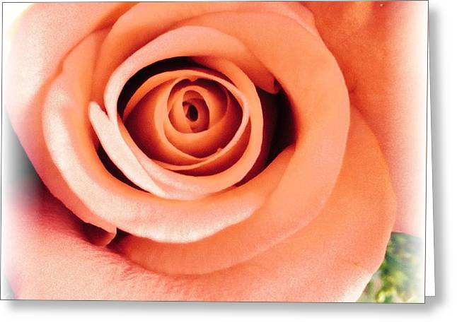 Petals Of Peach Greeting Card