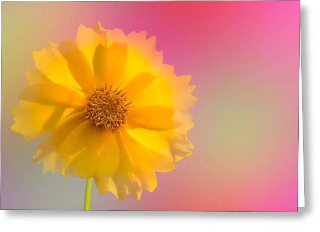Petals Of Sunshine Greeting Card
