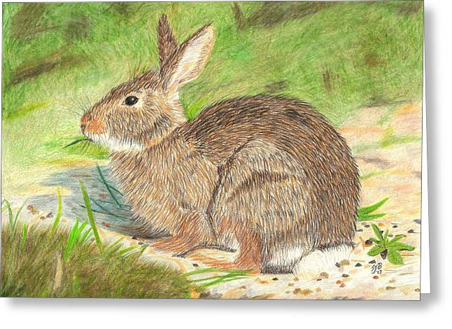 Peter Cottontail Greeting Card