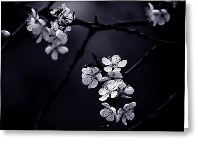 Petite Fleur De Mes Nuits Greeting Card