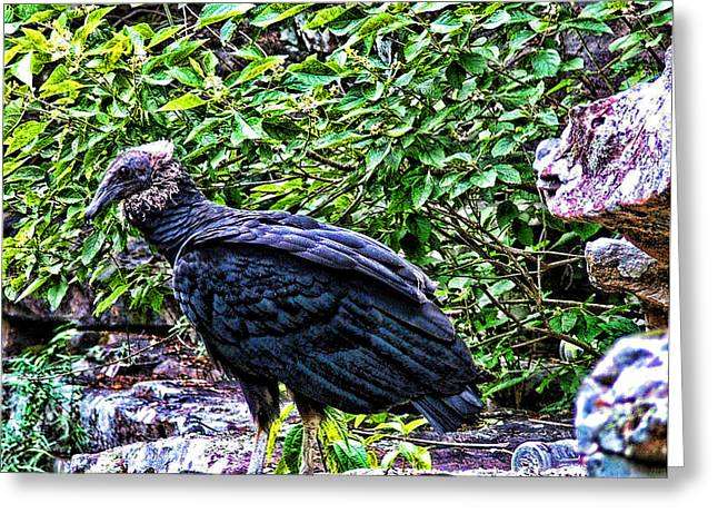 Petitjean Vulture Greeting Card by Joe Bledsoe