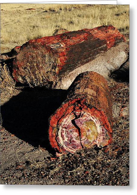 Petrified Logs, Petrified National Greeting Card