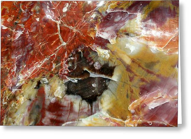 Petrified Wood Greeting Card