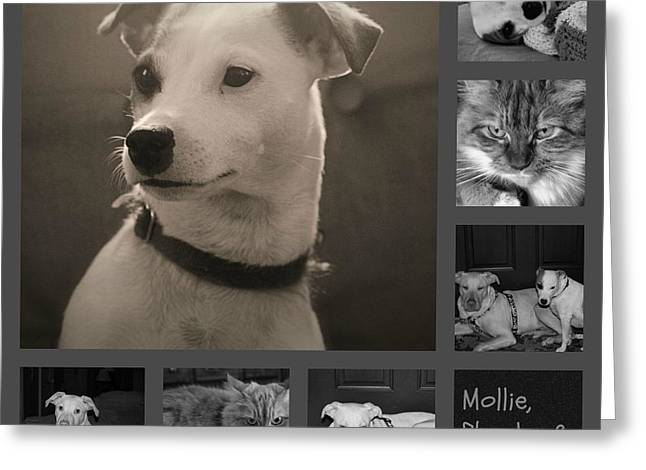 Pets Collage Greeting Card by Carolyn Ricks