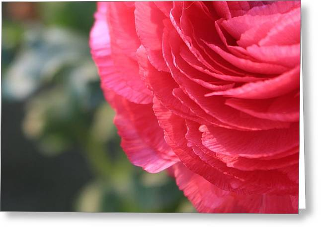 Petticoat Greeting Card by Elizabeth Sullivan